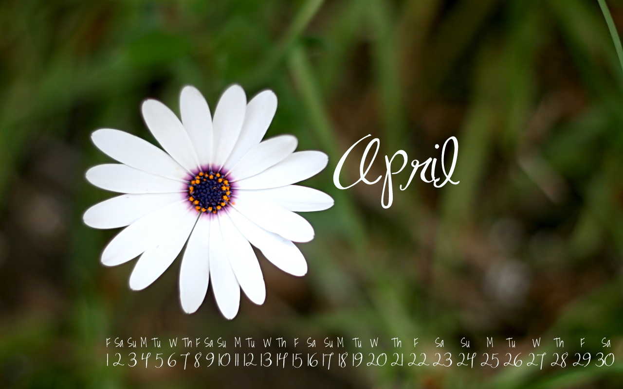 April Birth Flowers: The Daisy and The Sweet Pea